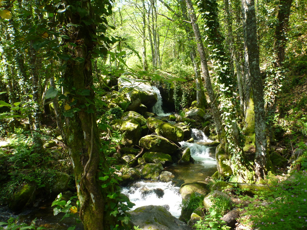 Fluss Camino del Agua - Nima Ashoff