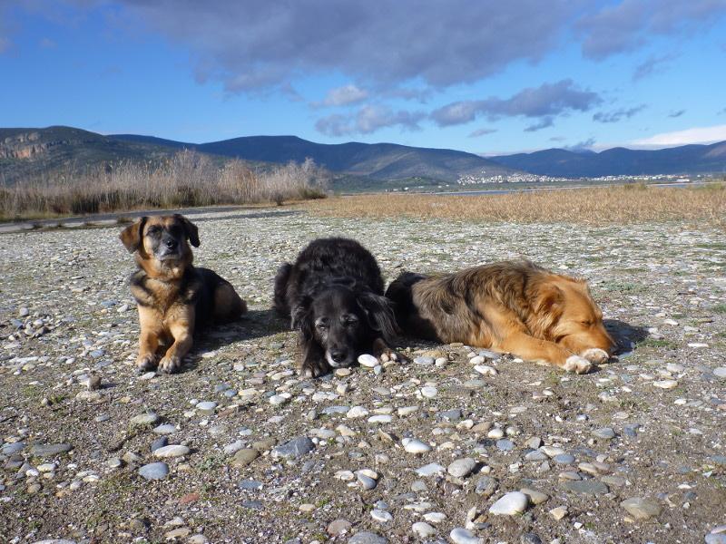 Hunde Astros - Nima Ashoff