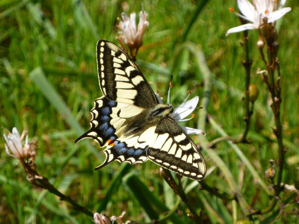Schmetterling - Nima Ashoff